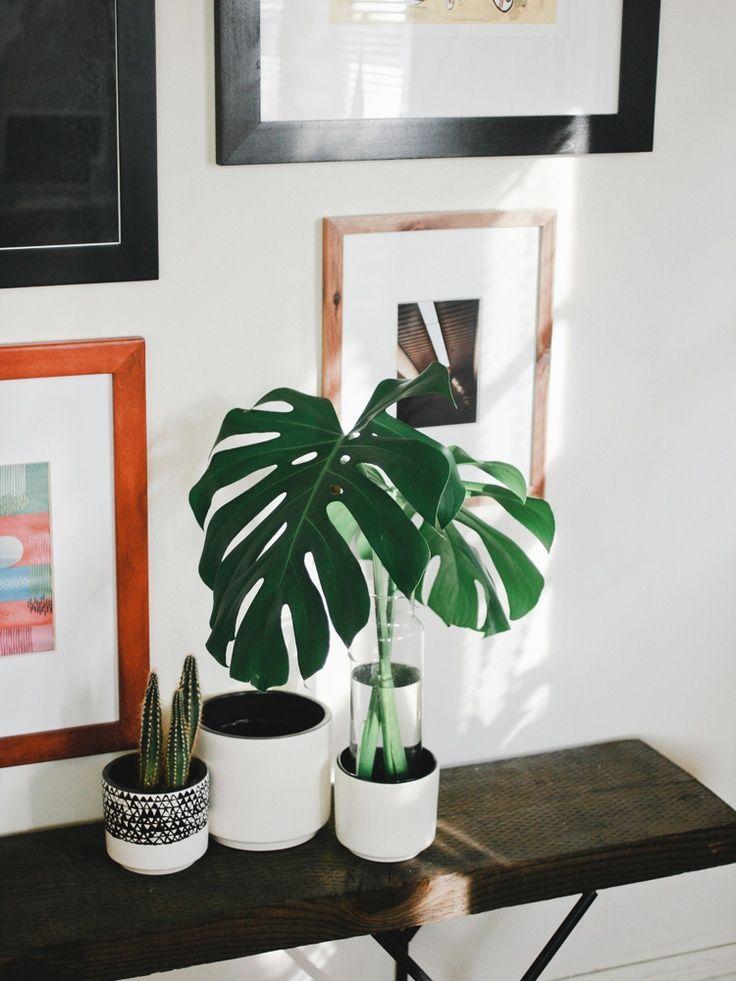 Les plus belles plantes d'intérieurs