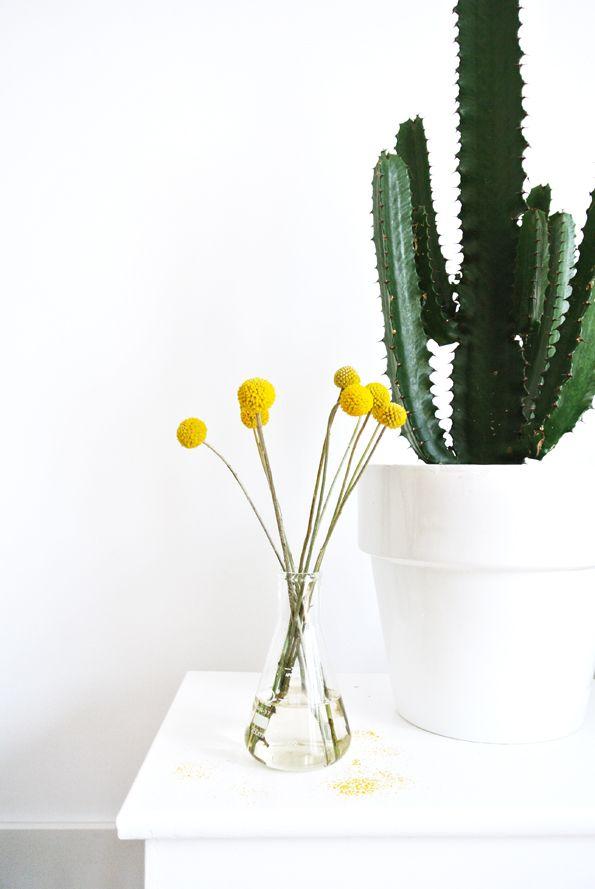 Un gros cactus et quelques fleurs jaunes de craspedia